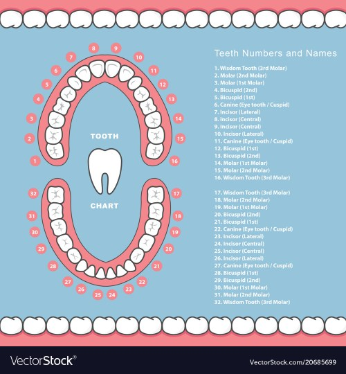 small resolution of tooth diagram name