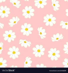 White cosmos flower on pink background Royalty Free Vector