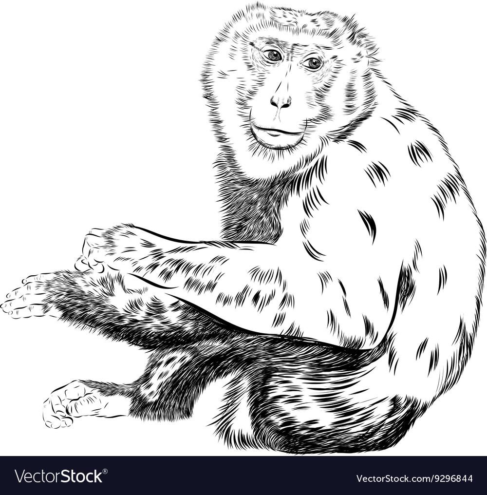 chimpanzee drawing animal artistic