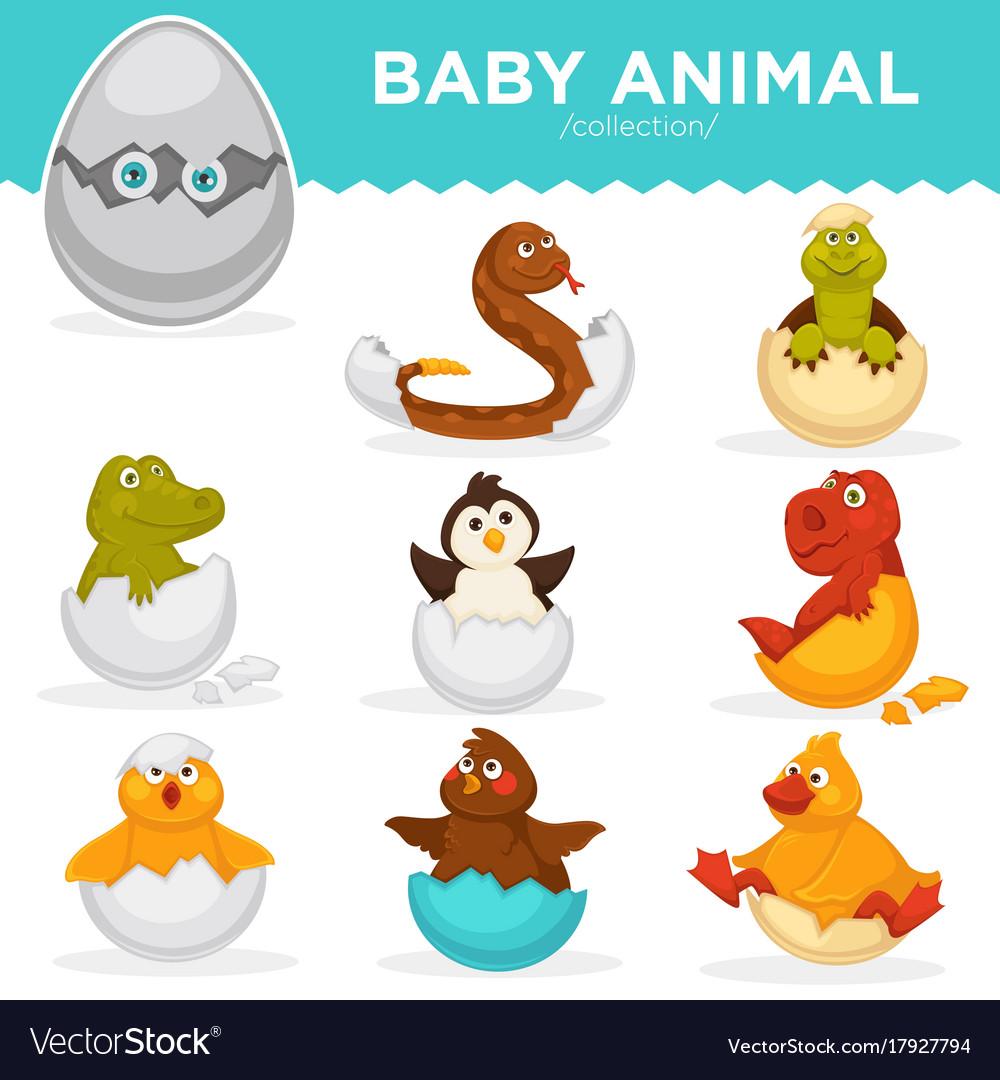 baby animals hatch eggs
