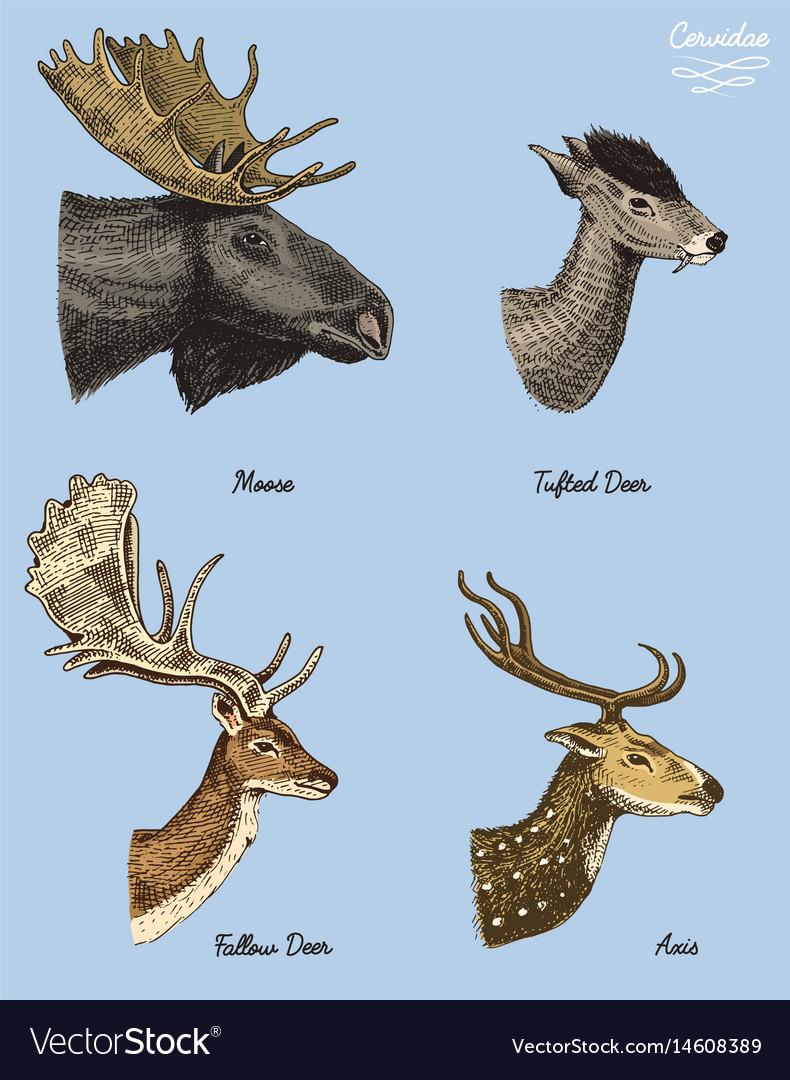 Buy moose deer at affordable price from 3 USD — 💰best... — Joom