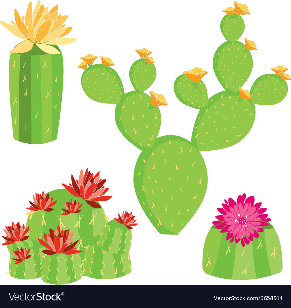 of different cactus with