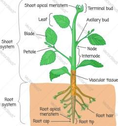 tree stem diagram [ 930 x 1080 Pixel ]