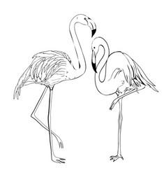 flamingo hand draw tropical