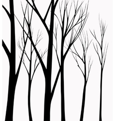 Birch tree silhouette background Royalty Free Vector Image