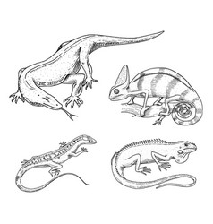 Iguana Vector Images (over 2,900)