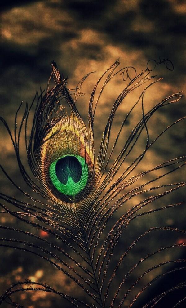 Feather Wilfrido Ordoez