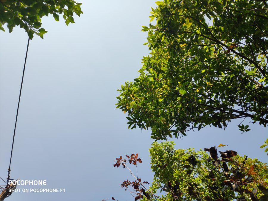 Poco F2 Pro против f1 f1 HDR дерево на фоне неба