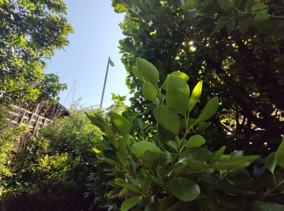Poco F2 Pro против f1 f2 широкая группа листьев