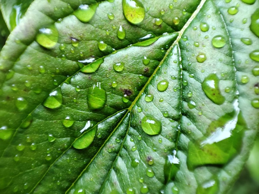 Pocophone F2 Pro макро-тест капли воды на листе