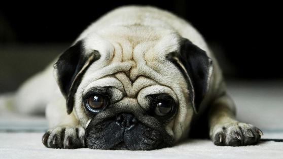 Image result for anjing comel