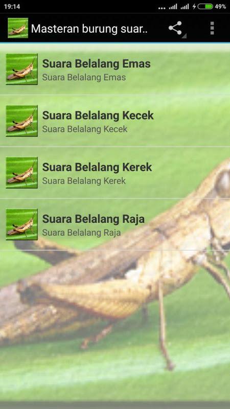 Download Masteran yang Bagus Untuk Kolibri Ninja - Rumah