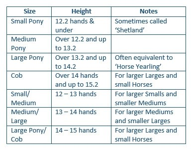 Halter and Bridle Sizing