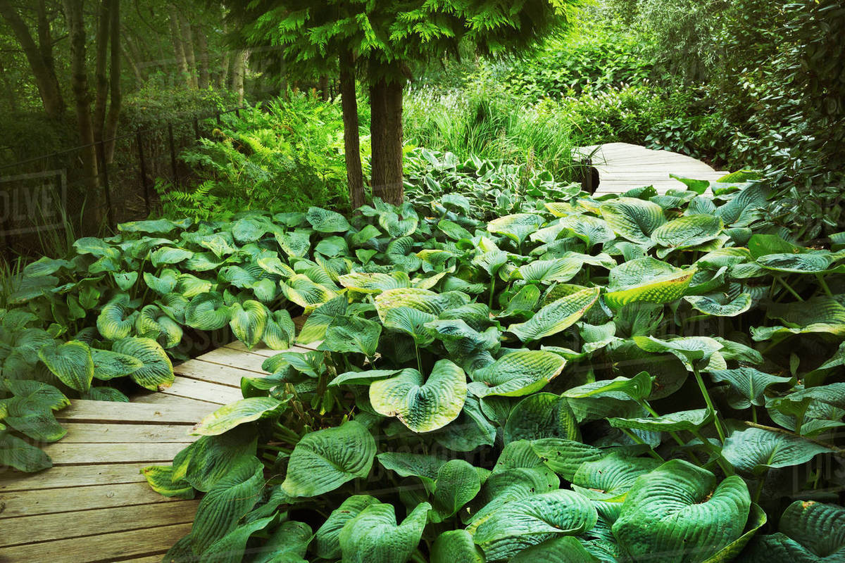 exotic plants with large