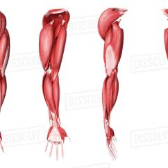 Muscles In Your Arm Diagram E30 Stereo Wiring Medical Illustration Of Human Four Side Views