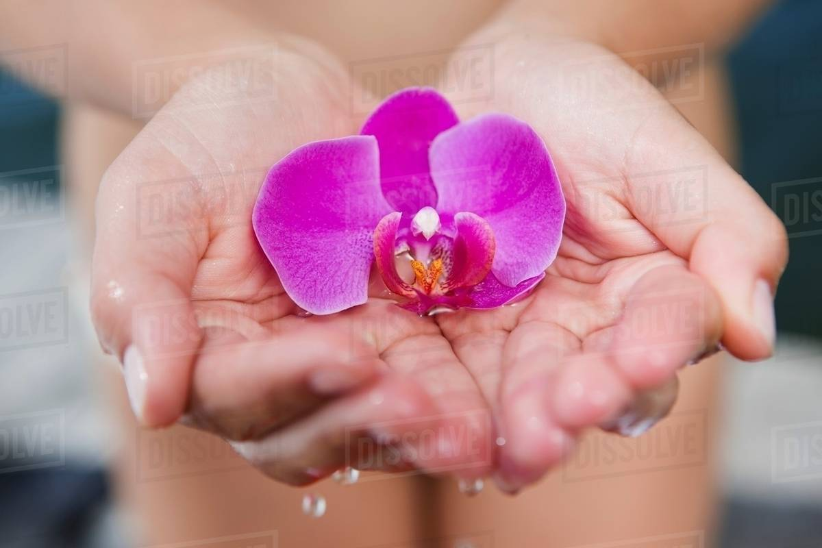 woman cupping orchid in