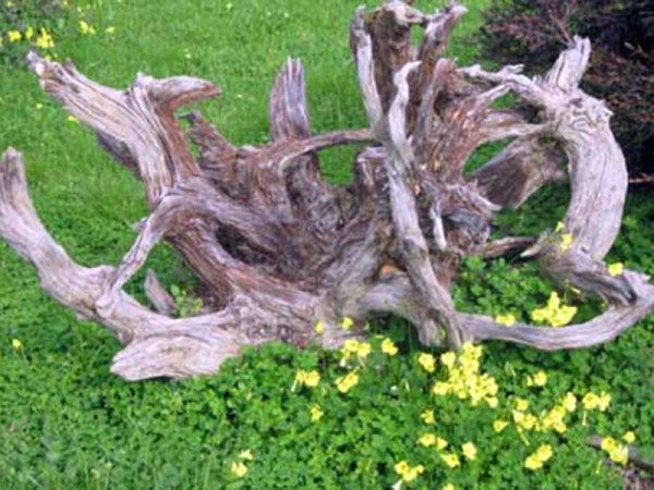 driftwood in landscaping - tennessee