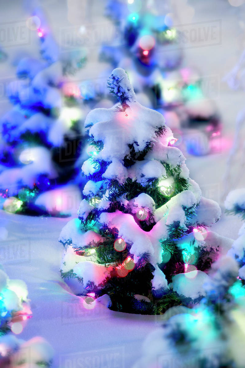 small christmas trees with