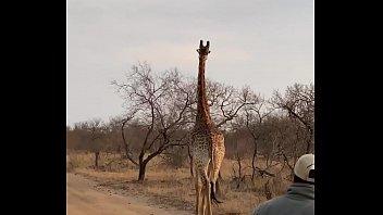Marina Beaulieu  having sex after a great safari