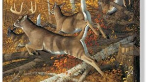 Whitetail Rush Wrapped Canvas Art American Expedition