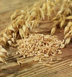 oat seeds and ears of oats on a wooden surface [ 1200 x 900 Pixel ]