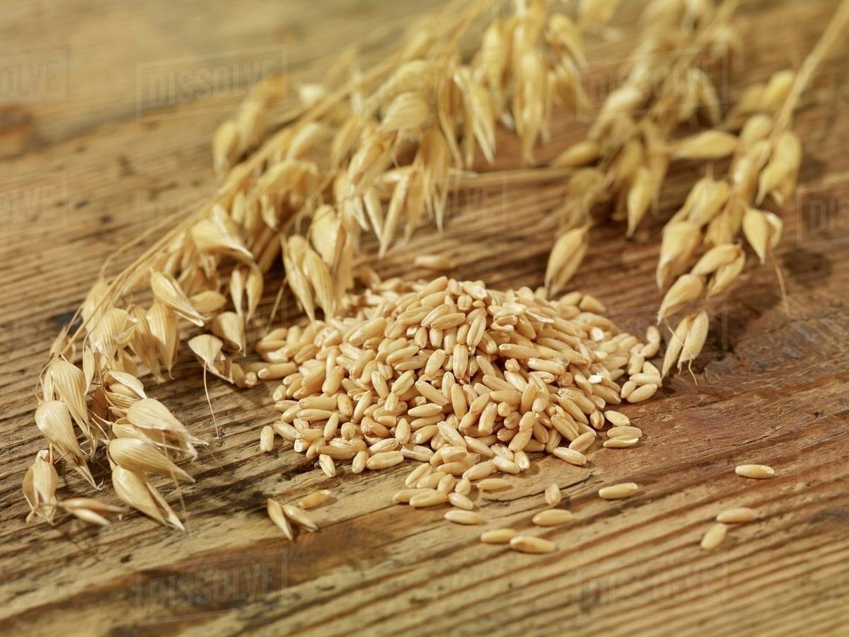 hight resolution of oat seeds and ears of oats on a wooden surface