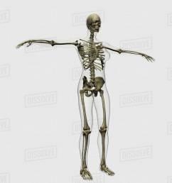 medical illustration of full female skeleton  [ 1200 x 1200 Pixel ]
