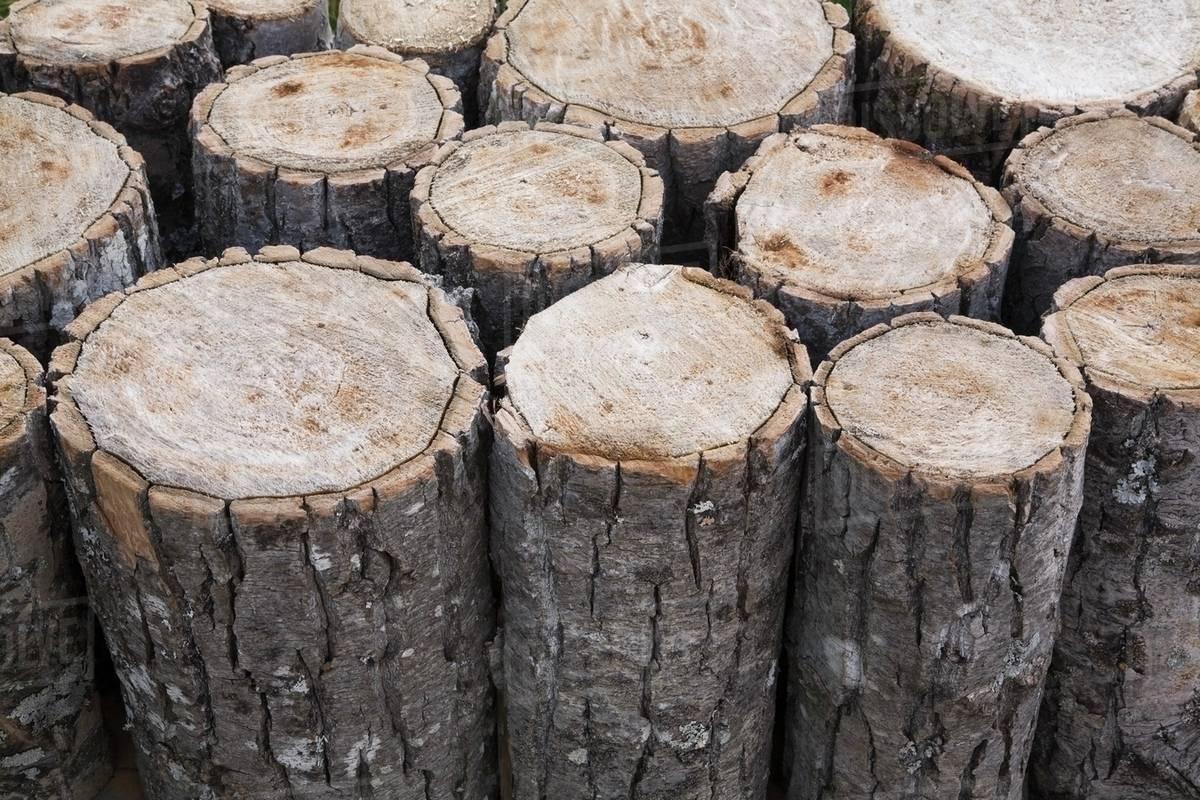 cut tree logs showing