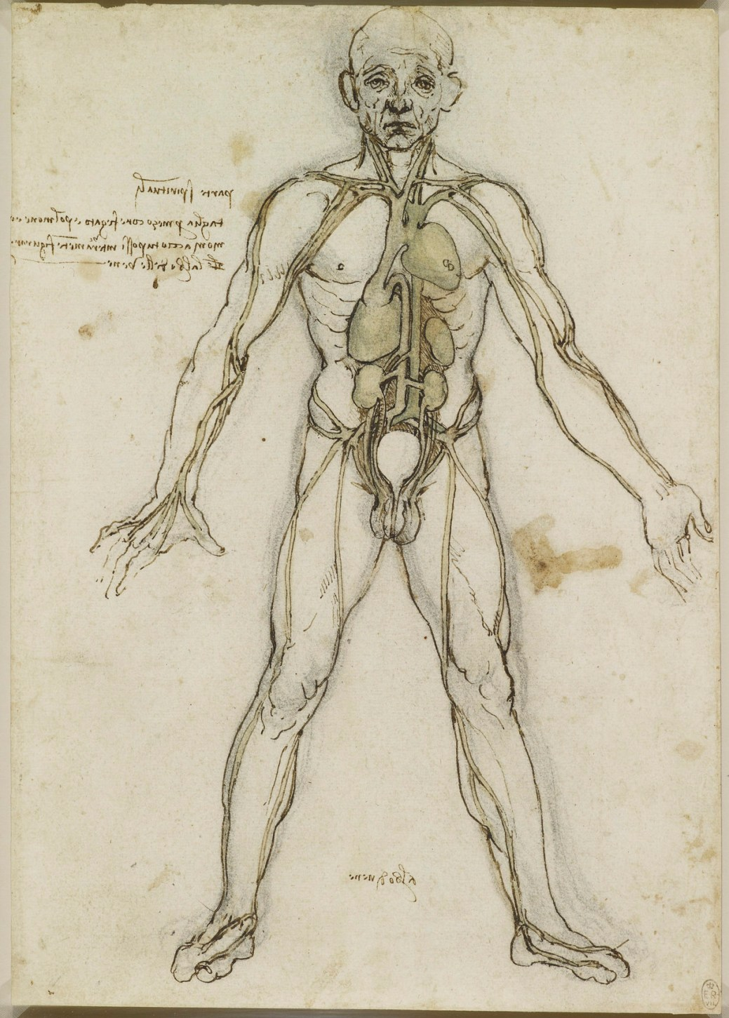leonardodavinci - Download the Sublime Anatomy Drawings of Leonardo ...