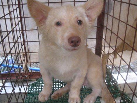 Dog - Animal Care