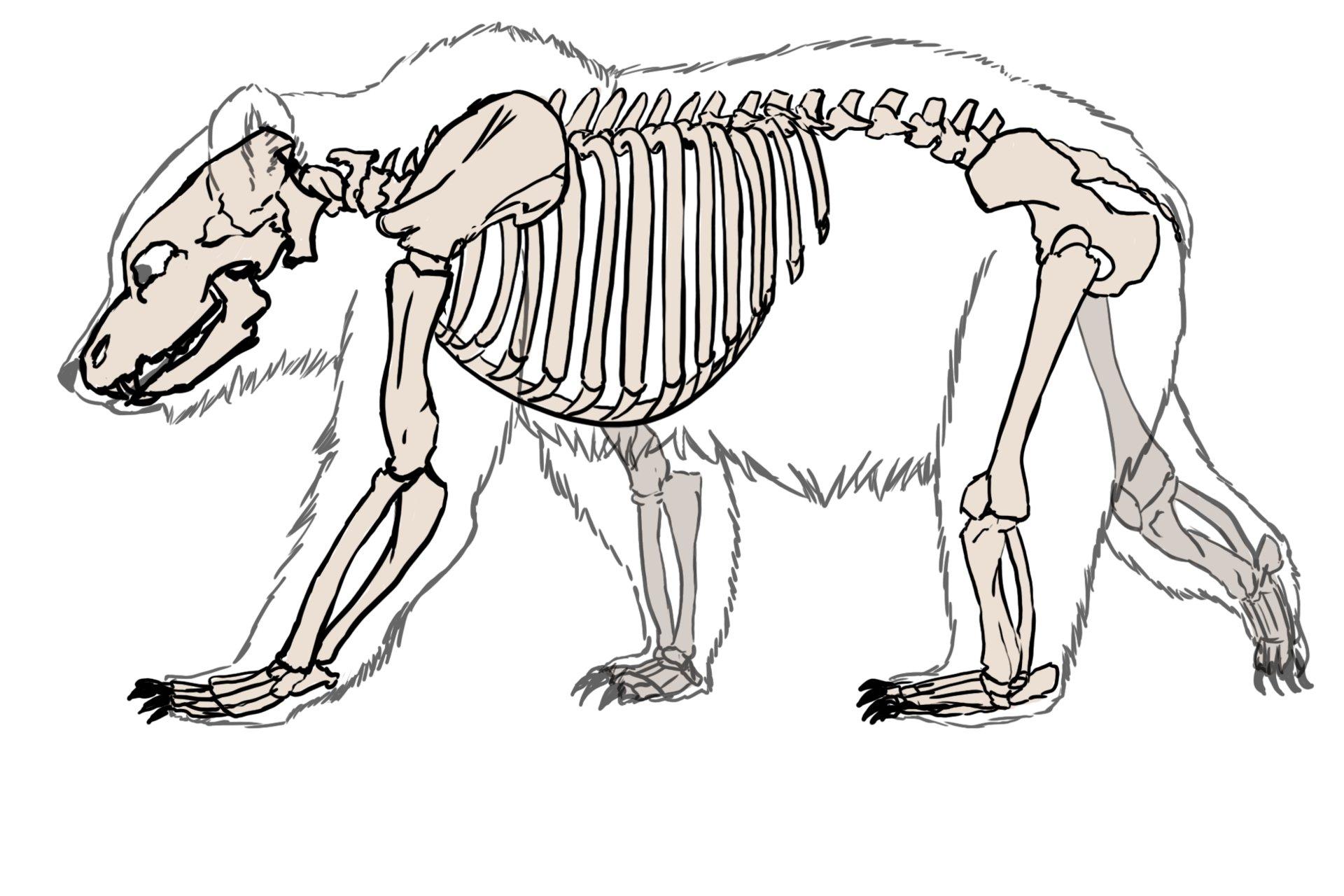 bear skull diagram 1999 dodge ram 1500 front axle artstation skeleton illustration kieran polaris