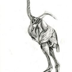 Ostrich Skeleton Diagram Yamaha Outboard Gauges Wiring Emu Organ Great Installation Of Artstation Animal Anatomy Grem Magic Rh Com Leg Muscles Kangaroo