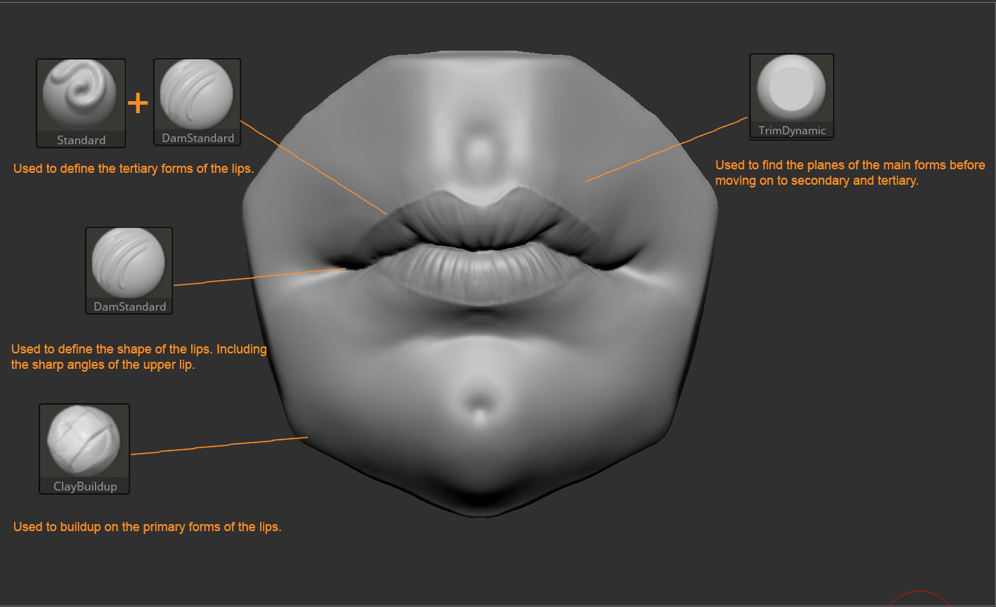 hight resolution of zbrush human anatomy mouth tutorial