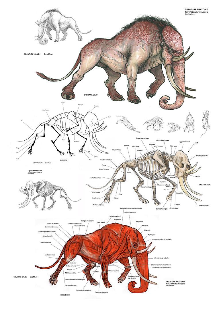 Glen Southern  Creature Anatomy