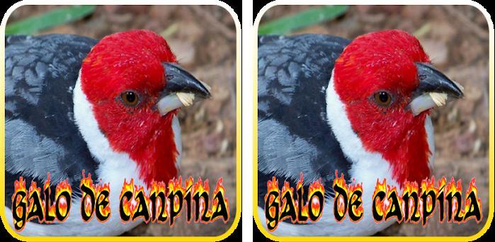 DOWNLOAD CLASSICO DE CANTO CURIO GRATUITO PARA