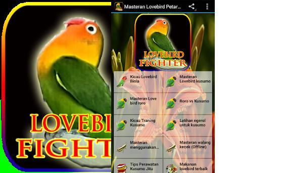 Masteran Lovebird Petarung On Windows Pc Download Free 1 11 Com Tahubulat Fighter