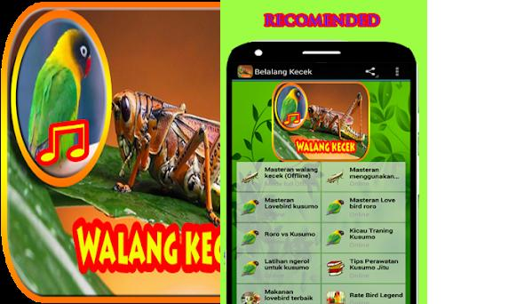 Belalang Kecek Masteran Lovebird Jitu On Windows Pc Download Free 1 8 Com Tahubulat Belalang