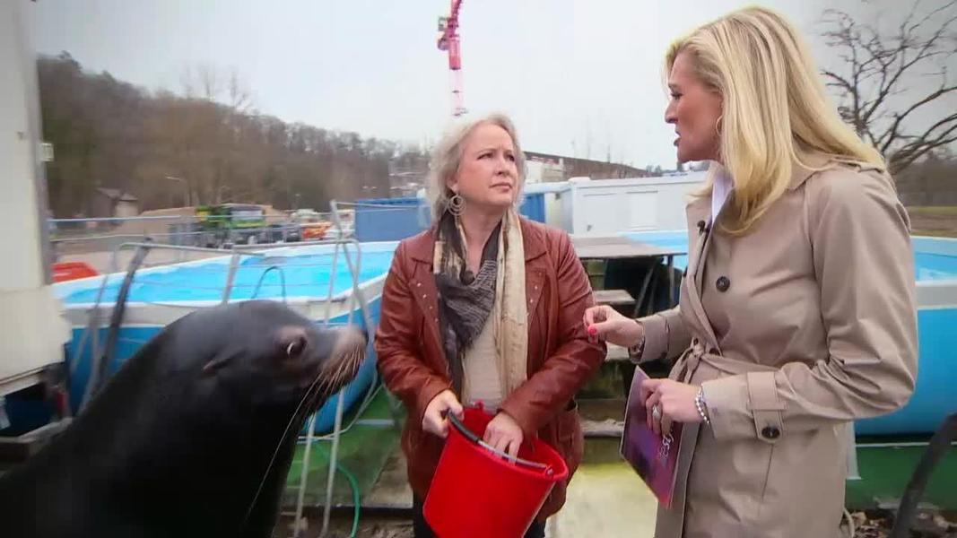 TeleZri LifeStyle  Valentina und die Seelwen