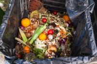 Repurposing Food Waste as Alternative Building Materials ...