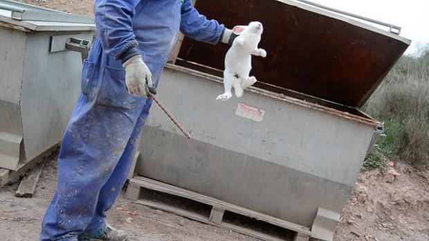 Maltrato de conejos en granjas españolas