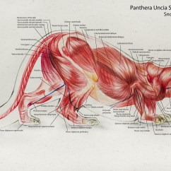 Snow Leopard Anatomy Diagram 2002 Ford F150 Xl Radio Wiring Artstation Animal Ace D Enkhtur Scroll To See More