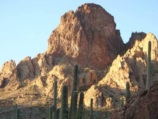 cactus in the Arizona desert