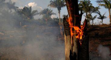 Resultado de imagem para amazônia