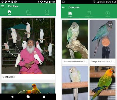 SGS Birds - Shukavana 1 1 2 apk download for Android • org