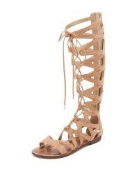 Sam edelman Gena Camel Suede Gladiator Lace Up Sandal in ...