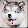 download Cute Hasky Puppies Screen Lock apk