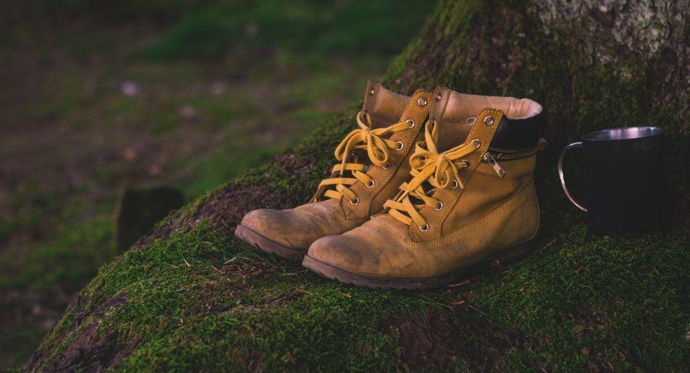 Ce voleur d'une centaine de chaussures à Berlin a quatre pattes et un museau - photo