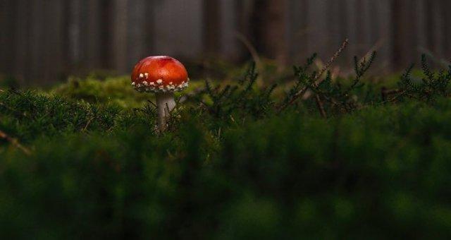 Des champignons
