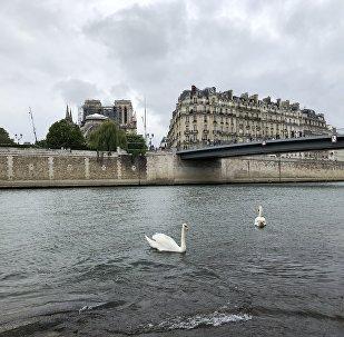 La vue de Notre-Dame de Paris après l'incendie du 15 avril 2019
