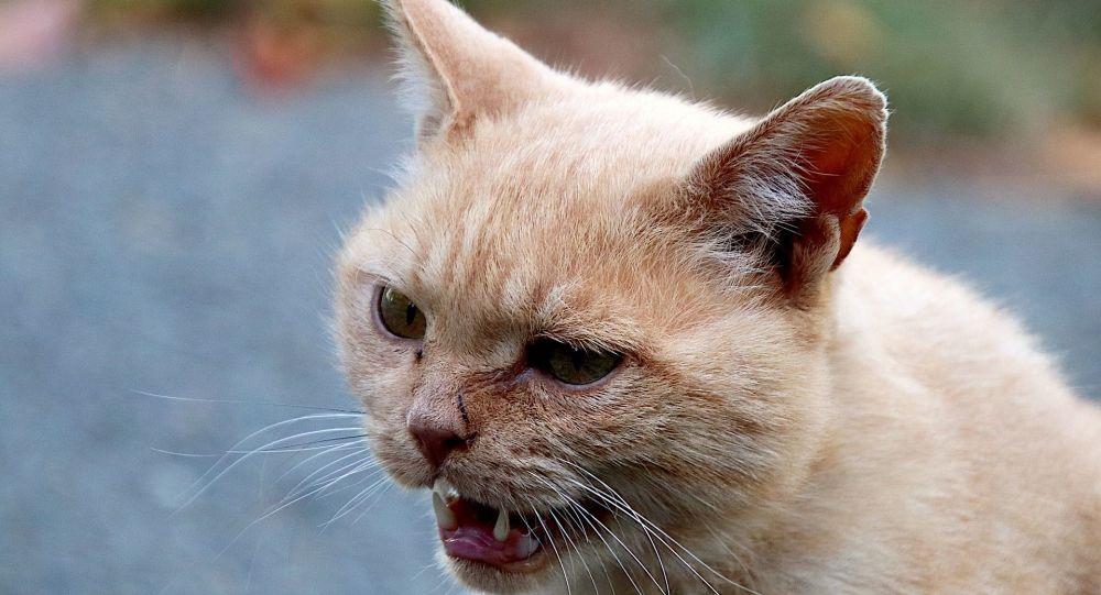 Quand deux chats se bagarrent derrière leur maîtresse au télétravail – vidéo